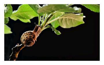 S1 Pro高光时刻  k20拍萌萌的小蜗牛