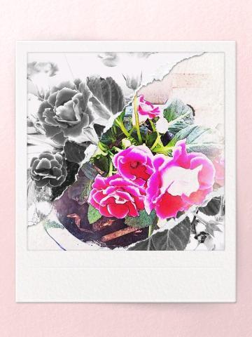 B612咔机下的花卉