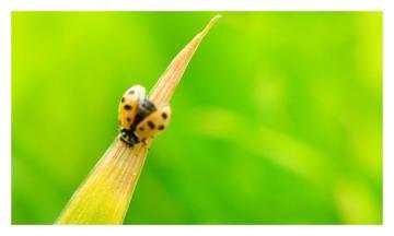 镜头下的昆虫(十)