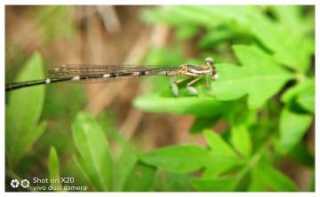 镜头下的昆虫(十一)
