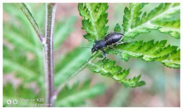 镜头下的昆虫(十二)