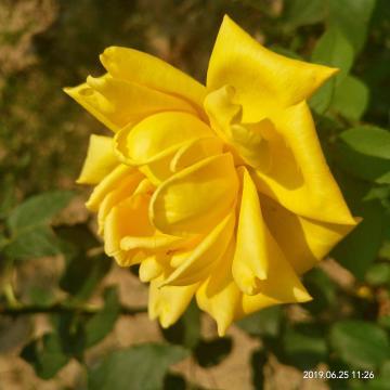 热季绽放的花朵