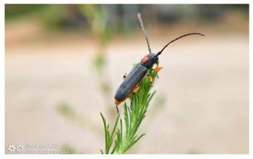 镜头下的昆虫(十三)