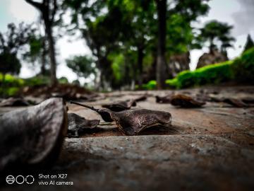 【X27摄影】雨后🌿