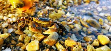 #X27印象夏日#   海滩戏蟹