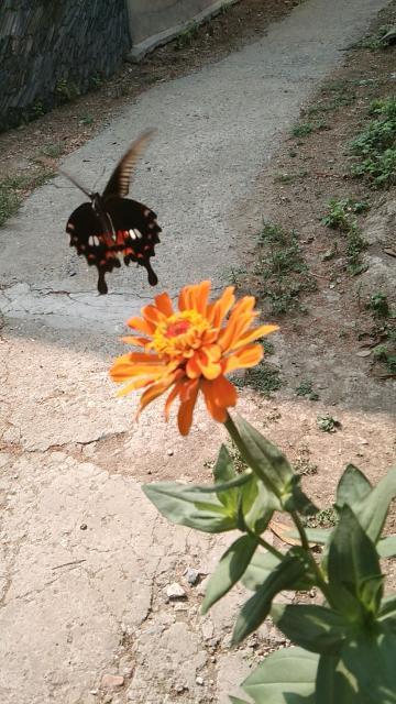 抓拍了一只蝴蝶