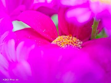 【X30 Pro】冬日里的花儿