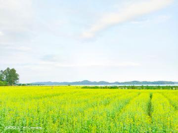 【iQOO3】你镜头里的春天是什么颜色?
