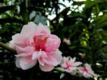 【Z1】温室里的春天
