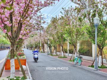 【NEX 3摄影】成都也有樱花巷🌸
