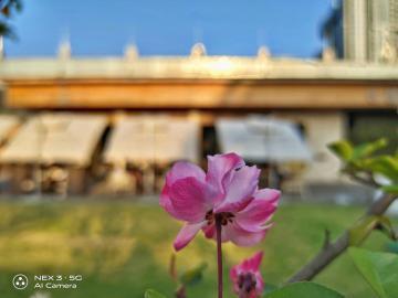 【NEX 3摄影】春天里