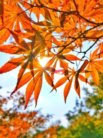 #S7最美秋色#  秋,那片叶